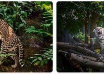 Mexico Wildlife