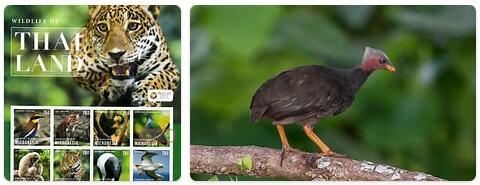 Micronesia Wildlife