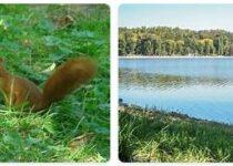 Moldova Wildlife