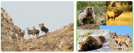 Mongolia Wildlife