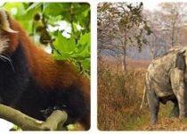 Myanmar Wildlife