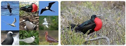 Nauru Wildlife