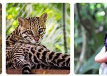 Nicaragua Wildlife