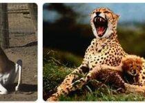 Niger Wildlife