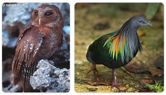 Palau Wildlife