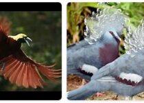 Papua New Guinea Wildlife
