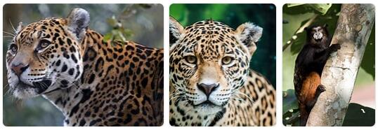 Peru Wildlife