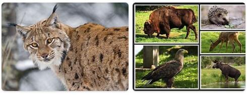 Poland Wildlife