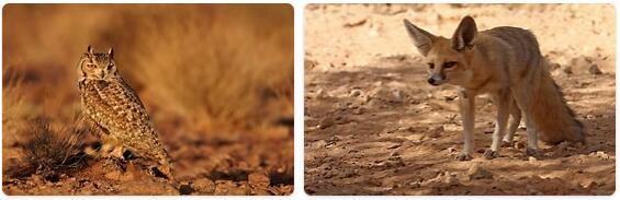 Qatar Wildlife