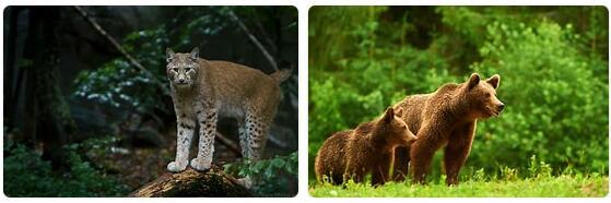 Romania Wildlife