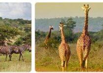 Rwanda Wildlife