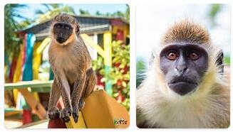 Saint Kitts and Nevis Wildlife
