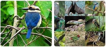 Samoa Wildlife