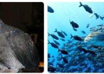 Sao Tome and Principe Wildlife