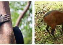 Sierra Leone Wildlife