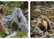 Slovenia Wildlife