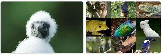 Solomon Islands Wildlife