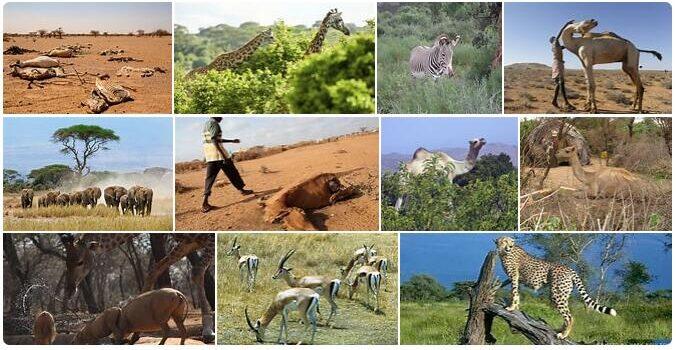 Somalia Wildlife
