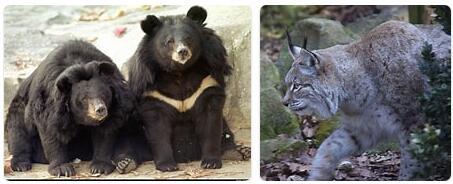 South Korea Wildlife