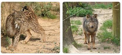 Spain Wildlife