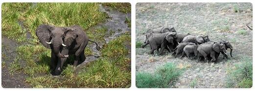 Sudan Wildlife