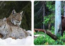 Sweden Wildlife