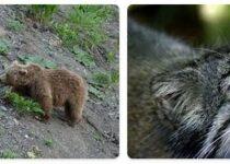 Tajikistan Wildlife