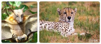 Togo Wildlife
