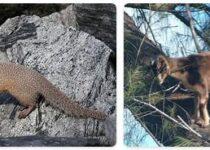 Tonga Wildlife