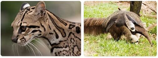 Trinidad and Tobago Wildlife