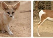 Tunisia Wildlife