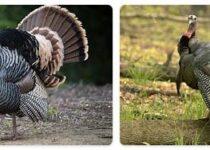 Turkey Wildlife