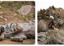 Turkmenistan Wildlife