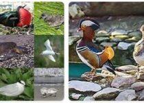 Tuvalu Wildlife