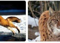Ukraine Wildlife