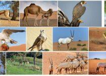 United Arab Emirates Wildlife