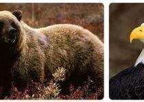 United States Wildlife