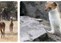 Uzbekistan Wildlife