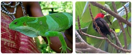 Vanuatu Wildlife