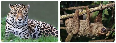 Venezuela Wildlife