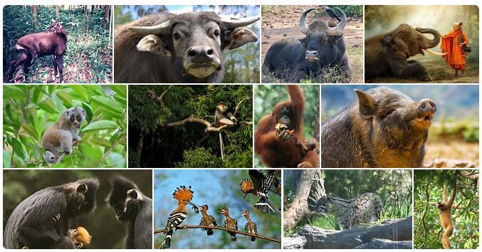 Vietnam Wildlife