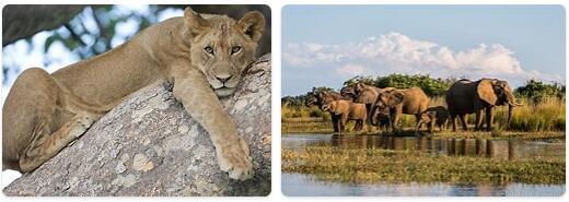 Zambia Wildlife